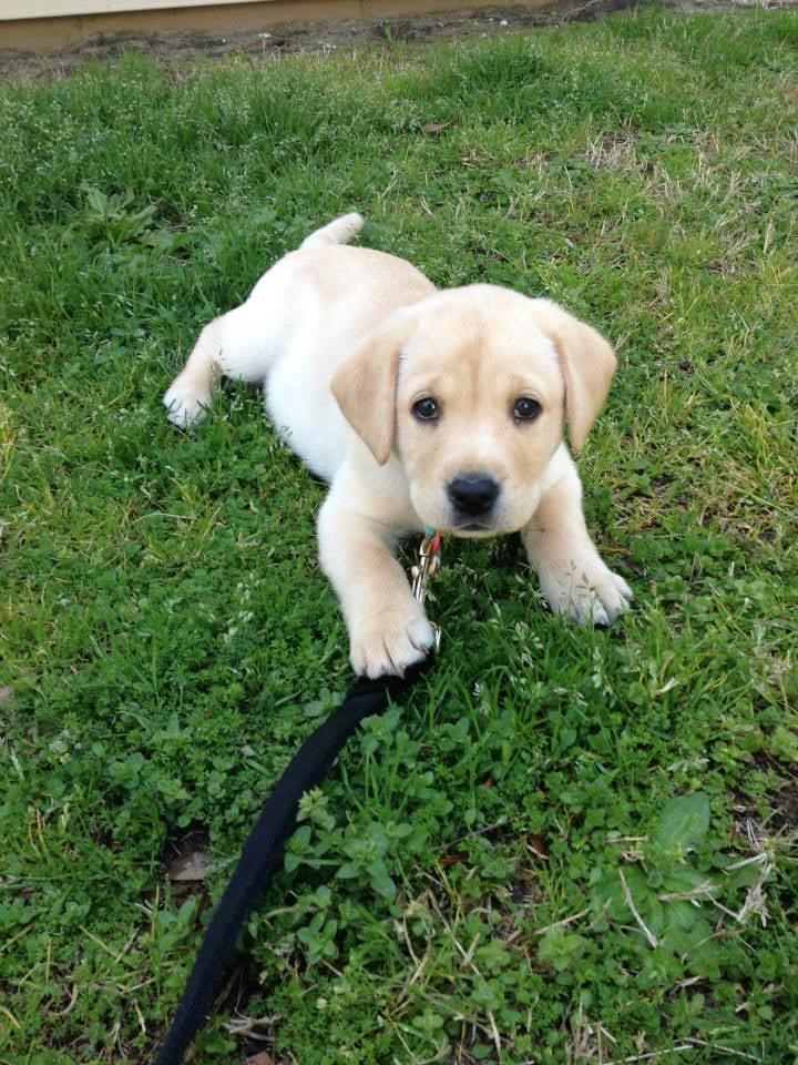 Charleston Pet Services