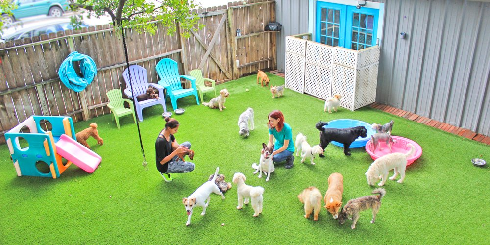 The best little dog house in texas 141 photos 141 for Best little dog house in texas