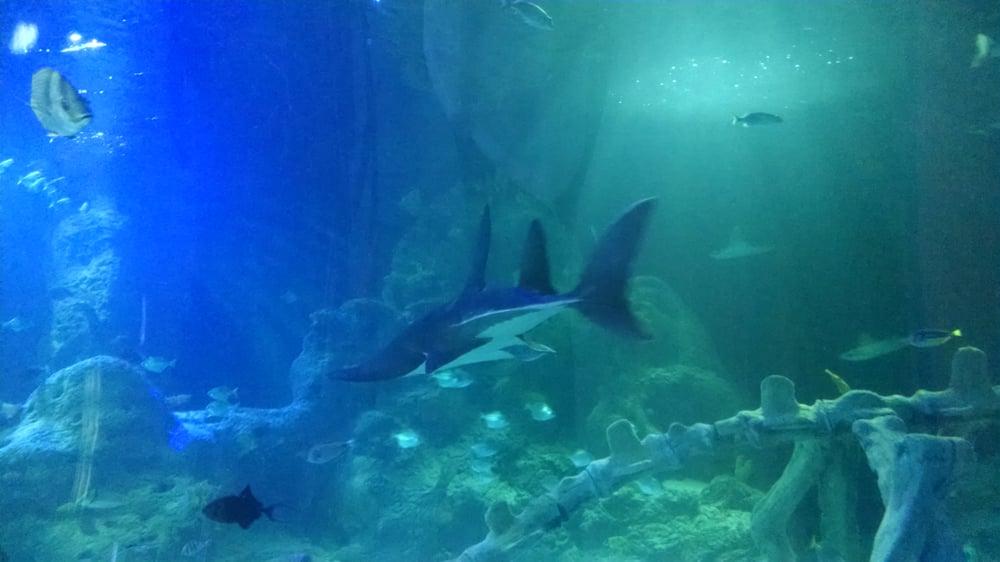 Great Sharks Yelp