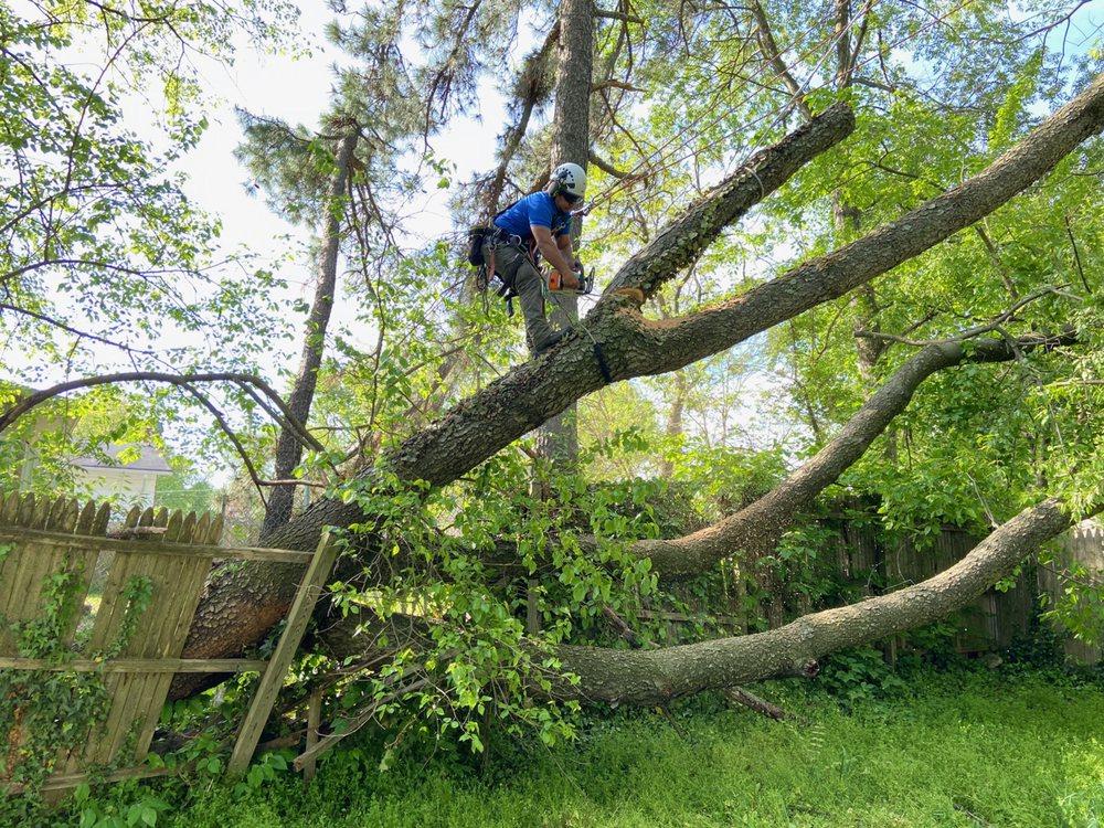Milton's Tree Care Services: Upper Marlboro, MD