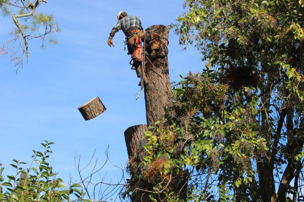 Mike's Tree Service: 16314 Spotted Eagle Dr, Leander, TX