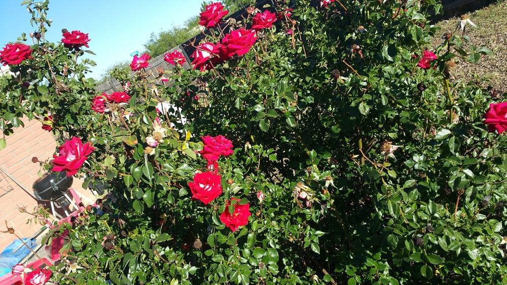 Ogden Lawn Care & Maintenance: 9345 E Nevada Dr, Hereford, AZ