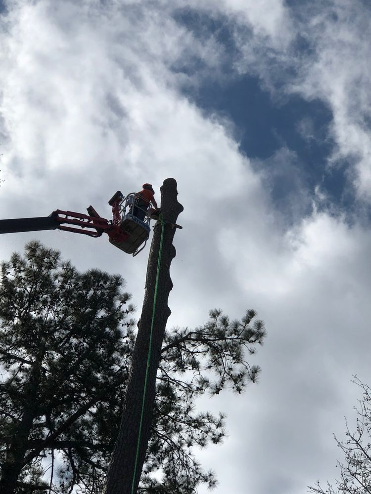 State Tree Service: 1455 N Pike E, Sumter, SC
