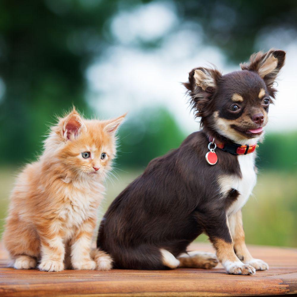 VIP Petcare: Auburn, IN