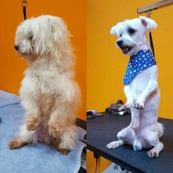Paws Paradise - 28 Photos - Pet Groomers - 2846 SW Port St