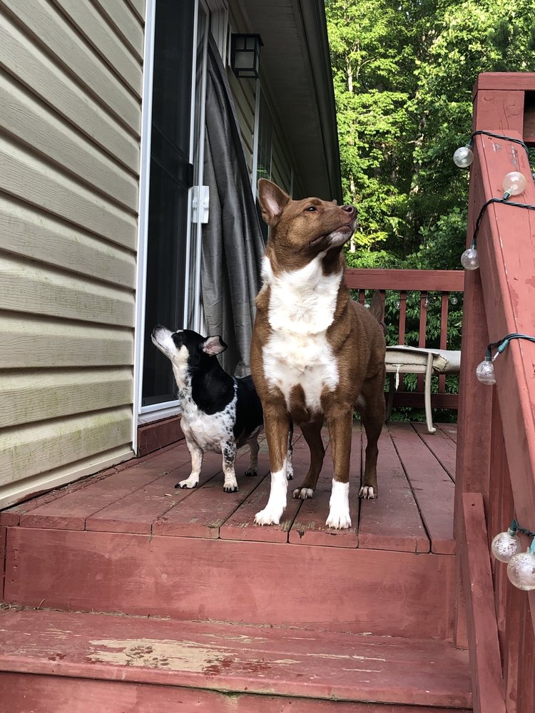 We Let the Dogs Out: Youngsville, NC