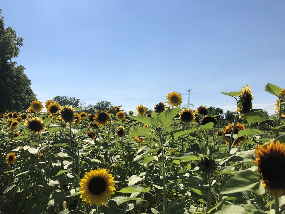M & D Farms And Garden Center: 14946 S Bell Rd, Homer Glen, IL