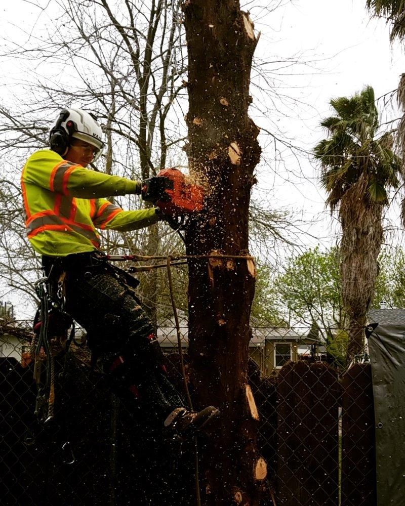 FISK'S TREE & EXCAVATING SERVICE: 42365 Highway 49, Ahwahnee, CA