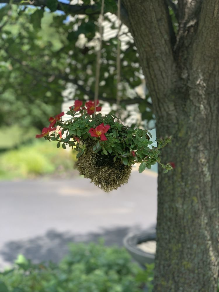 Floral & Hardy of Skippack