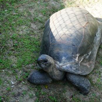 Central Florida Zoo Botanical Gardens 190 Photos 103 Reviews Zoos 3755 Nw Hwy 17 92