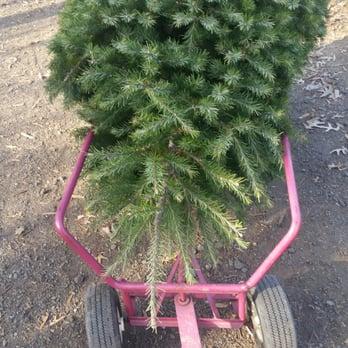 Photo Of Mclaughlin Tree Farm Christmas Trees Nursery Robbinsville Nj United