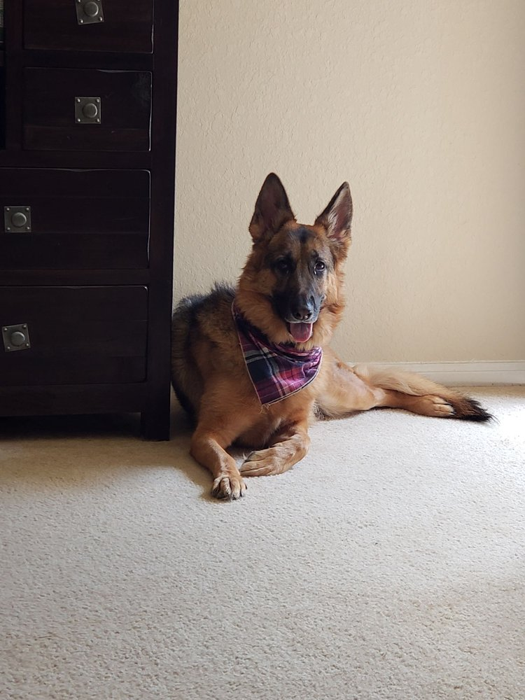 Pilla's Pet Services: Richmond, TX