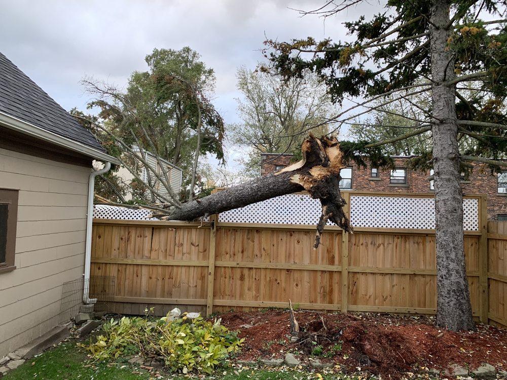Mays Tree and Stump: Lancaster, NY
