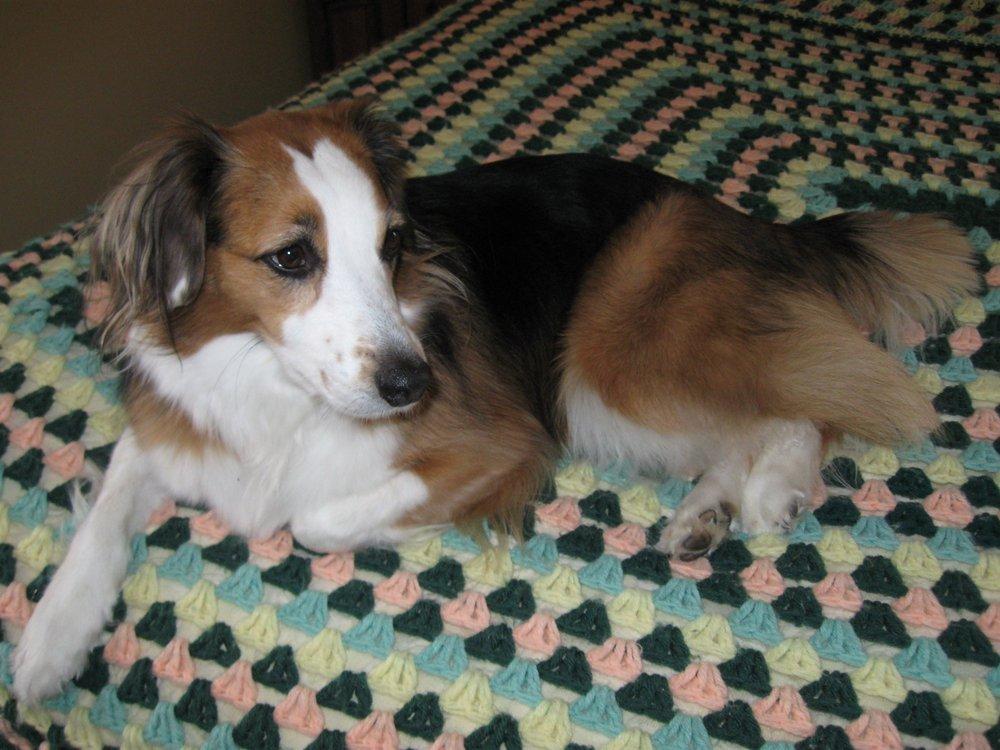 Homeward Bound Dog Rescue of Minnesota: Monticello, MN