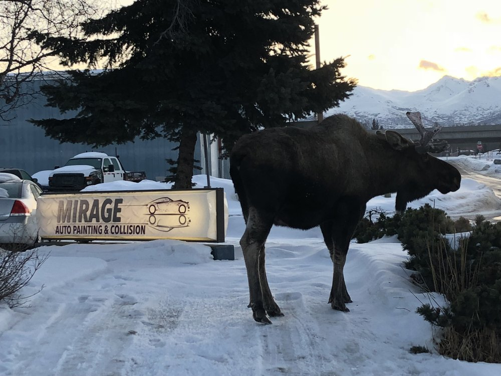 Mirage Auto Painting & Collision: 1151 E 76th Ave, Anchorage, AK
