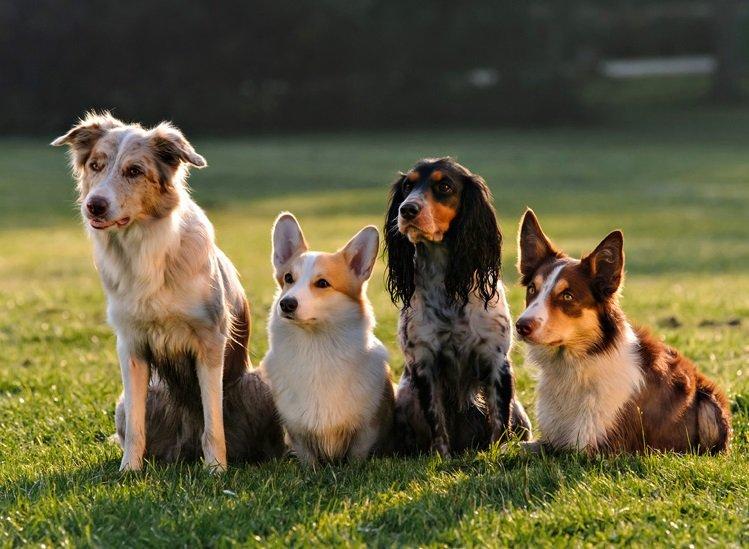 El Paso Animal Emergency & Veterinary Specialty Center: 1220 Airway Blvd, El Paso, TX