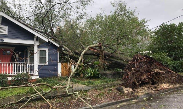 Stout Tree Service: 800 W Cherokee Dr, Jefferson City, TN