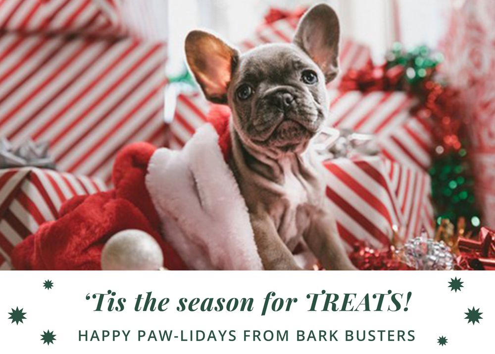 Bark Busters Home Dog Training Orland Park: Orland Park, IL