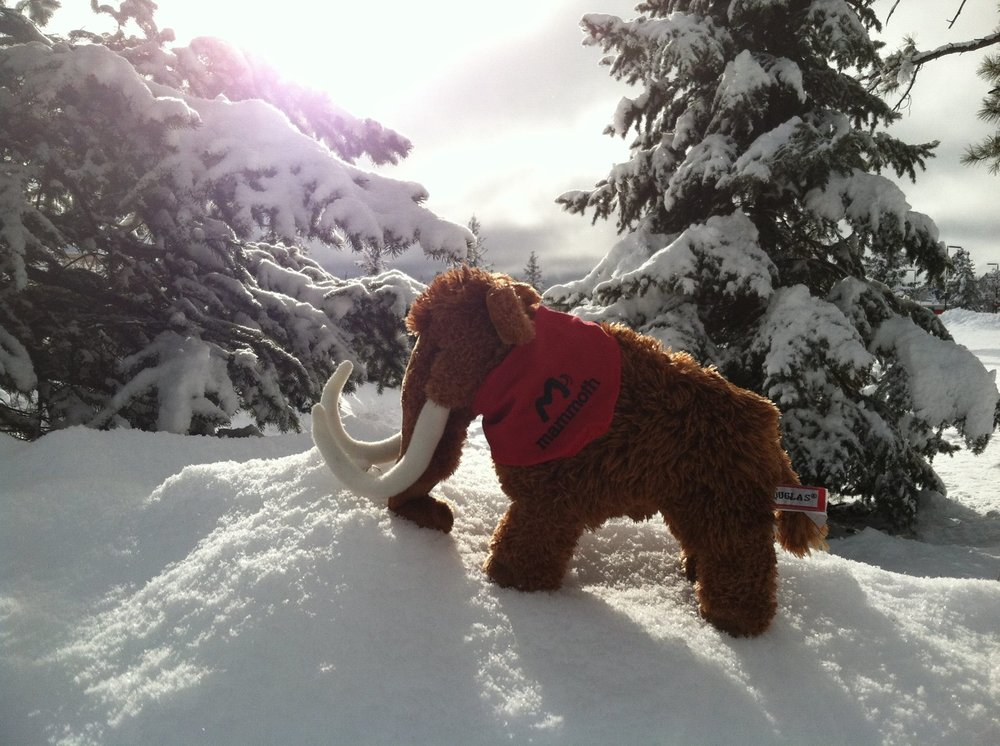 Photo of Mammoth Restoration: Pleasant Gap, PA