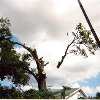 Alexander Tree Service: 2132 State Rd 225 E, Battle Ground, IN