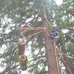 Baumpflege  Ascend Baumpflege - Tree Services - zippelhaus 6, Altstadt ...