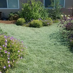 Photo Of Gardefacts Landscape Design Santa Barbara Ca United States Drought Tolerant