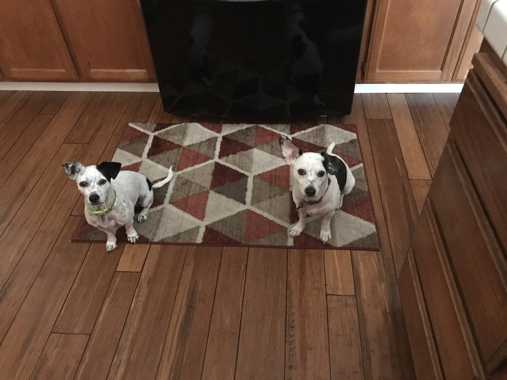 Happy At Home Pet Sitting Service: Vacaville, CA