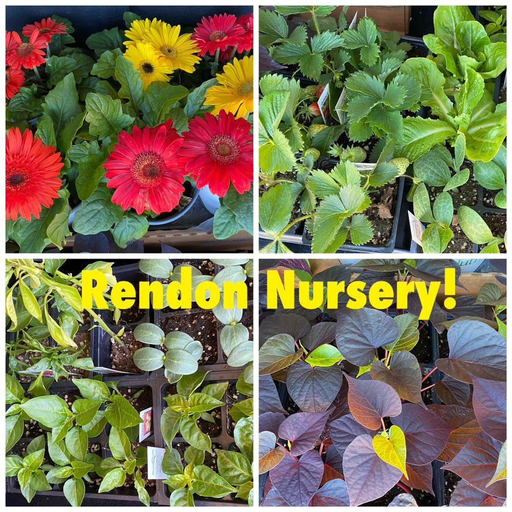 Rendon Nursery and Firewood: 5426 E Fm 1187, Burleson, TX