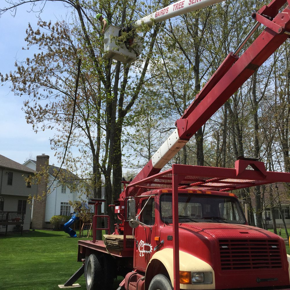 Baird's Tree Service: 286 Maplecroft Rd., North Lima, OH