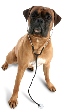 Affordable Animal Clinic: 1040 S Long Beach Blvd, Compton, CA