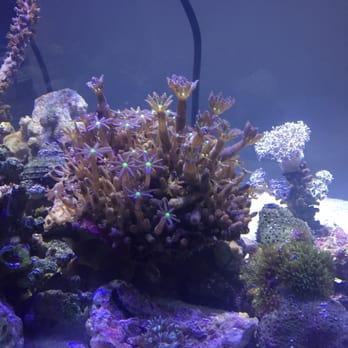 Los Angeles Aquarium | Yo S Aquarium 15 Photos 69 Reviews Aquarium Services 5846