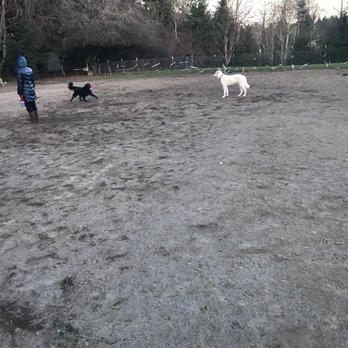 Summerlake Dog Park Tigard Or