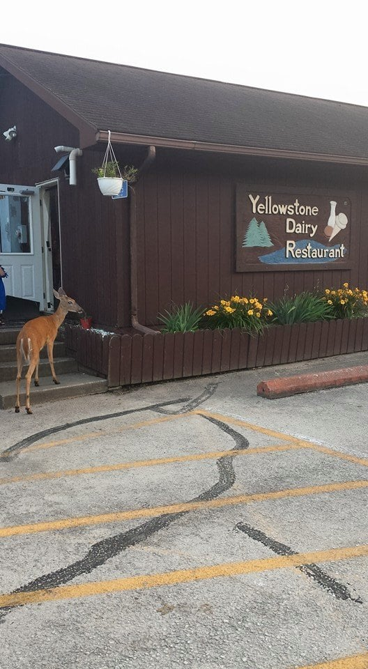 Yellowstone Dairy Bar: 7125 Lake Rd, Blanchardville, WI