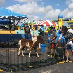 Flea Market Miami >> Opa Locka Hialeah Flea Market 46 Photos 29 Reviews Flea