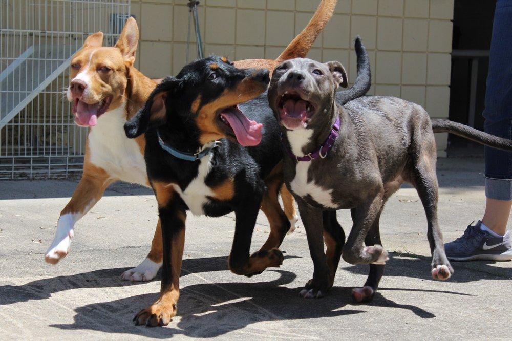 Cedar Valley Humane Society: 7411 Mount Vernon Rd SE, Cedar Rapids, IA