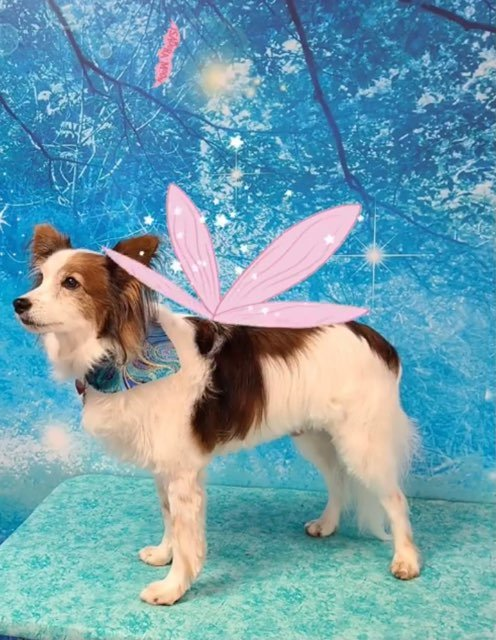 FairyTails Pet Grooming & Daycare: 2890 Boones Creek Rd, Johnson City, TN