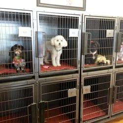 Tucson Az Dog Grooming