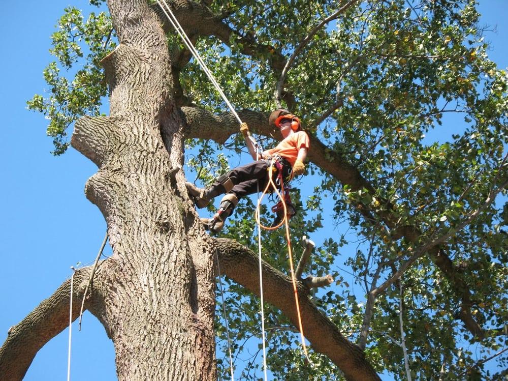 Tarzan Tree Care 17 Photos Services Englewood Co