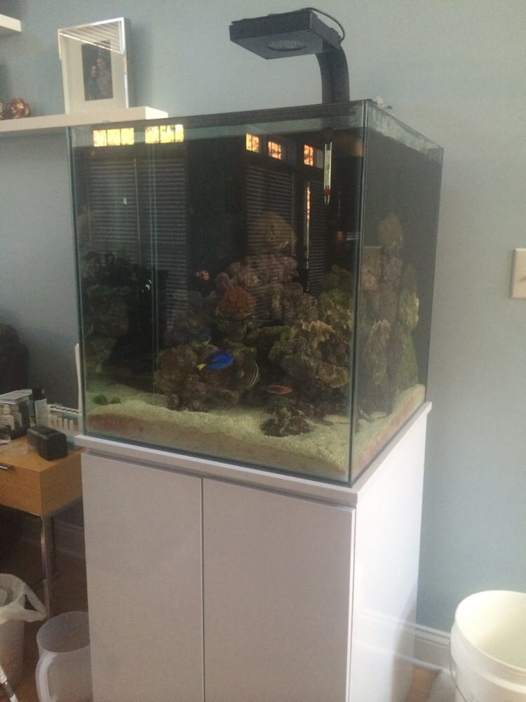 Our Beautiful 60 Gallon Reef Aquarium And Stand Installed