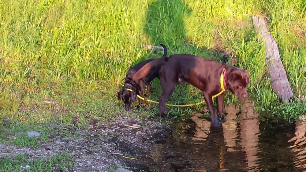 Dog Training Oxford Ma