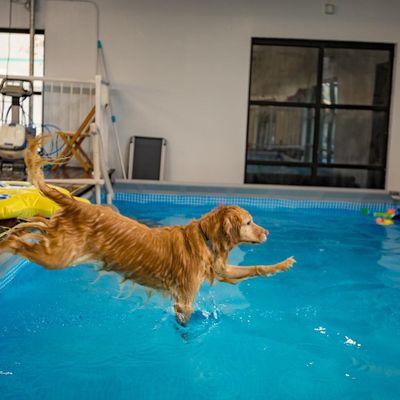 Dog Pool Club - 88 Photos & 41 Reviews - Dog Parks - 1129 ...