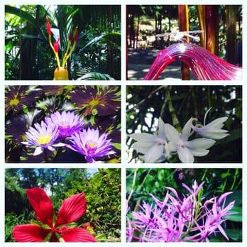 Atlanta Botanical Garden 1351 Photos 357 Reviews Botanical Gardens 1345 Piedmont Ave Ne