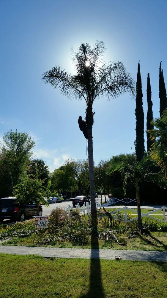 Rick's Palm Tree Service: Agoura, CA