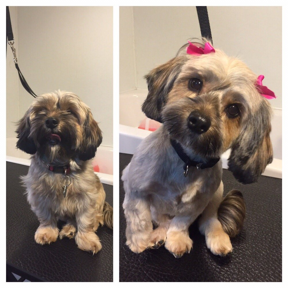 Photo of My Dog's Groomer: Melrose Park, IL