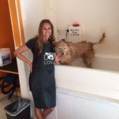 Dippity dog self serve pet wash 48 photos 114 reviews pet photo of dippity dog self serve pet wash oceanside ca united states solutioingenieria Gallery