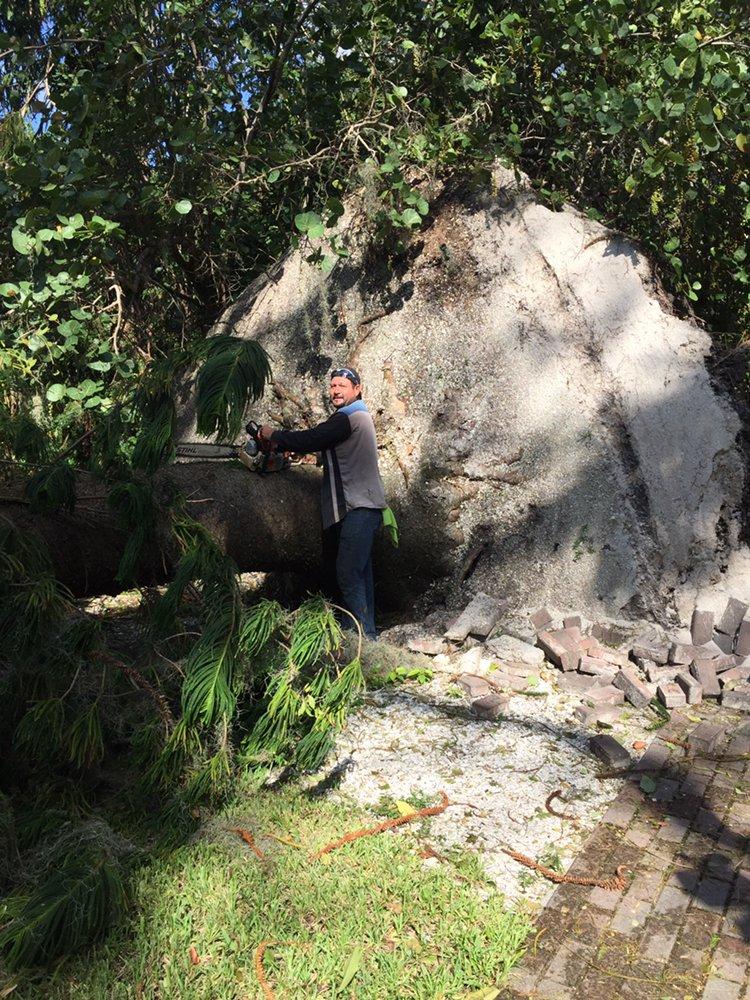Ventura Tree and Lawn Service: 3640 Gocio Rd, Sarasota, FL