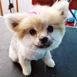 woofytail pet groomlandia 57 photos 21 reviews pet training rh yelp com