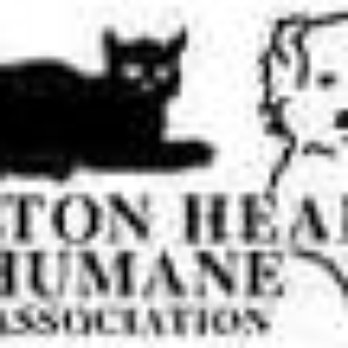 Rescue Dogs At Hilton Head Humane Society