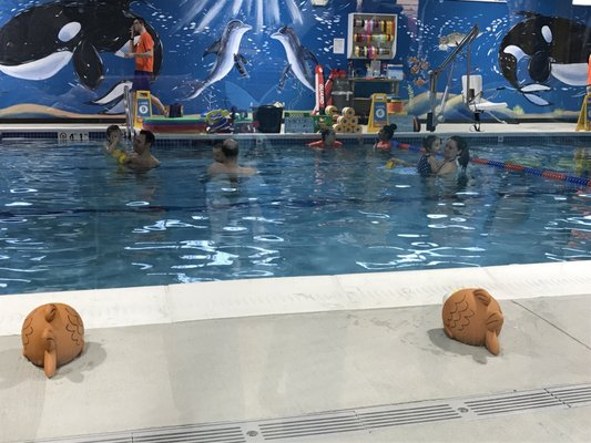 Goldfish Swim School Marlborough 43 Apex Drive Marlborough Ma