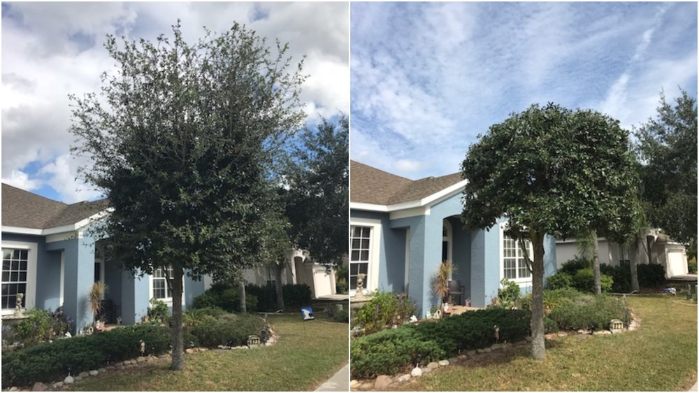 Purple Palm Landscaping: 4526 Hamlets Grove Dr, Sarasota, FL